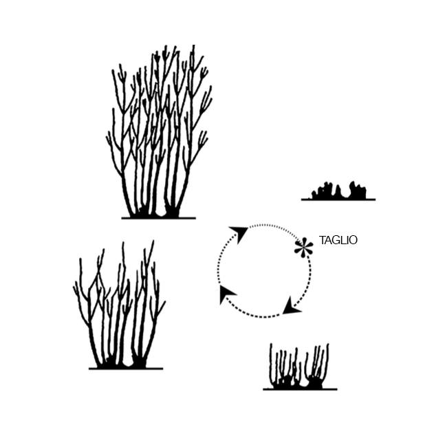 ciclo-bosco