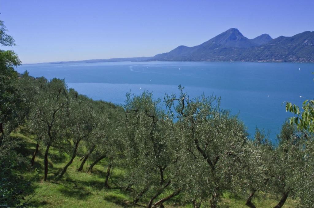 oliveto-garda
