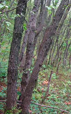 Il bosco ceduo